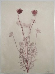 queen anne's lace #13
