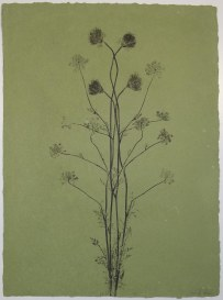 queen anne's lace #20